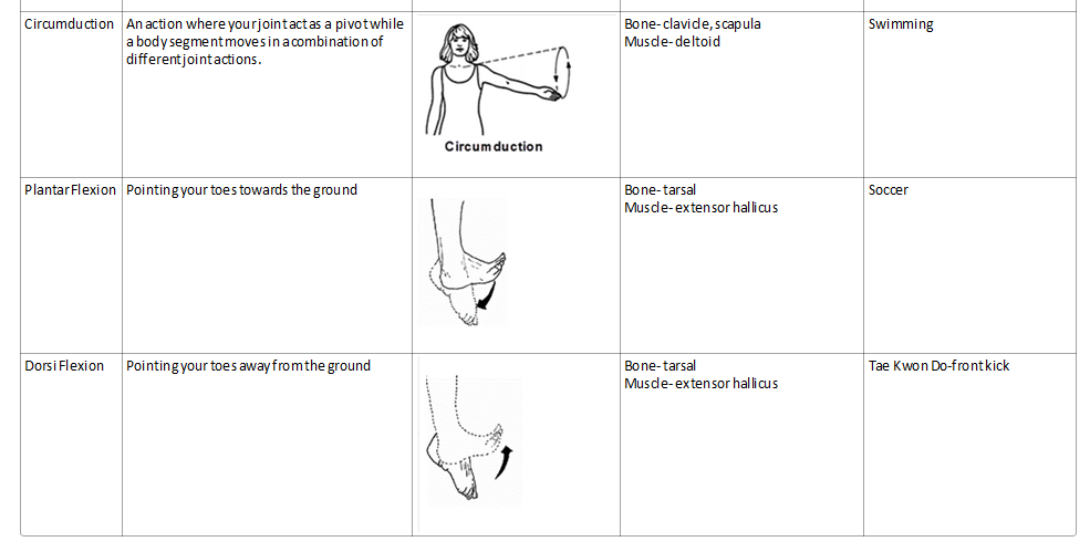 Joint Action And Movable Joints Thgs Pass